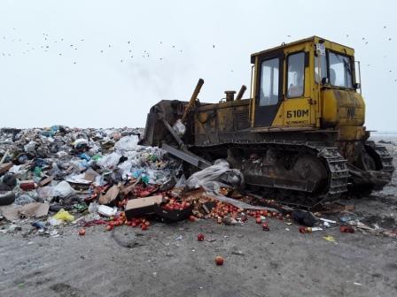 В Курской области под бульдозер пустили более тонны санкционных яблок