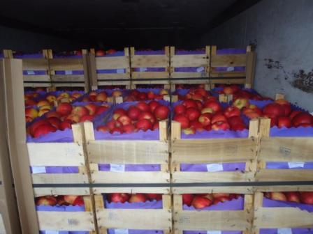В Курскую область не пустили 20 тонн зараженных яблок из Молдовы